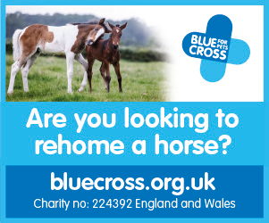 Blue Cross 2020 B (Gloucestershire Horse)