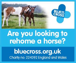 Blue Cross 2020 B (Gloucestershire Horse)
