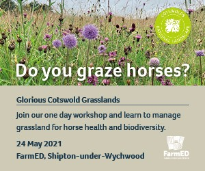 Glorious Costwold Grasslands (Gloucestershire Horse)