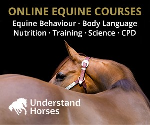 Understand Horses (Gloucestershire Horse)